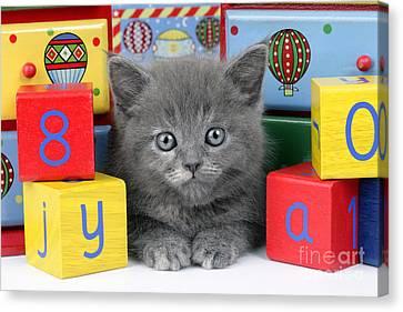 Alphabet Cat Ck415 Canvas Print by Greg Cuddiford