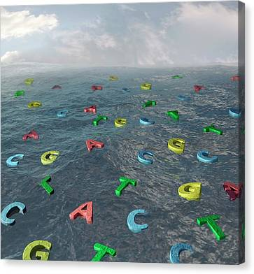 Alphabet Of Creation Canvas Print by Robert Brook