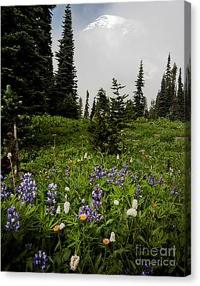 Alpine Beauty Canvas Print