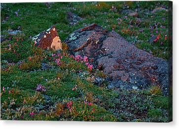 Canvas Print featuring the photograph Alpine Blush by Jim Garrison