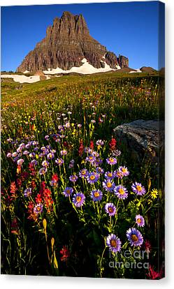 Alpine Meadow Canvas Print by Aaron Whittemore