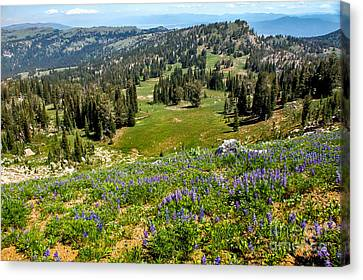 Alpine Meadow Canvas Print by Robert Bales