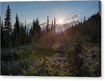 Alpine Meadow Sunrays Canvas Print by Mike Reid