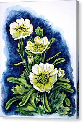 Alpine Ranunculus Canvas Print by Zaira Dzhaubaeva