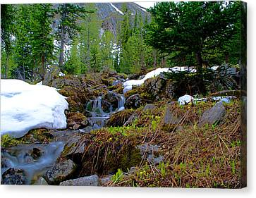 Canvas Print featuring the photograph Alpine Spring  by Kevin Bone