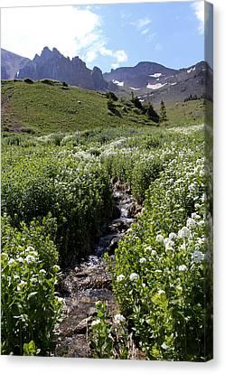 Alpine Stream Canvas Print by Marta Alfred