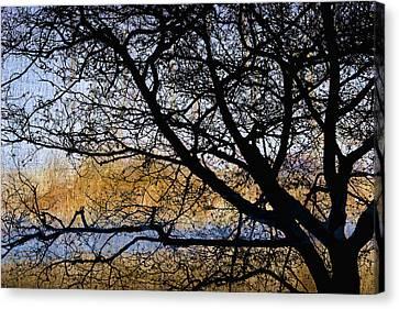 Alsea Bay Tree Canvas Print
