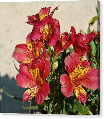 Alstroemeria In Pastel Canvas Print by Suzanne Gaff