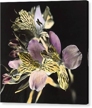 Canvas Print featuring the photograph Alstroemeria by Lana Enderle