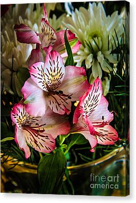 Alstroemeria Canvas Print by Robert Bales