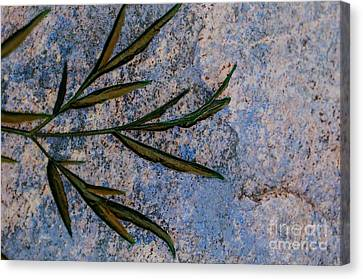 Canvas Print featuring the photograph Altered State by Judy Wolinsky