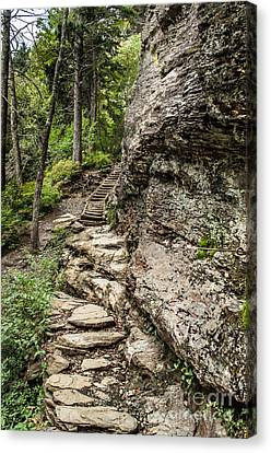 Alum Cave Trail Canvas Print by Debbie Green