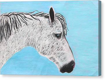 Alvaro Stallion Canvas Print by Jeanne Fischer