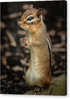 Canvas Print featuring the photograph Alvin by Linda Karlin
