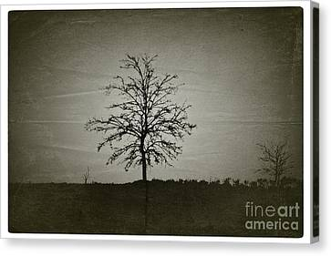 Am Trees - No.226 Canvas Print by Joe Finney