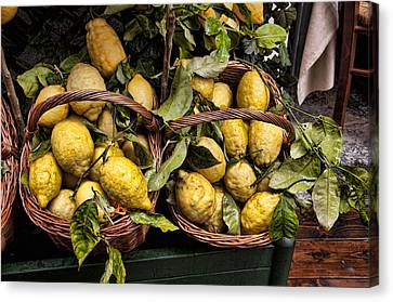 Amalfi Lemons Canvas Print by Antique Images