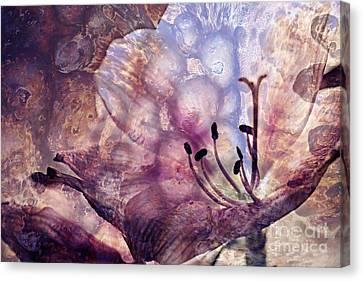Amarillys Fantasy Photoflower Art Canvas Print