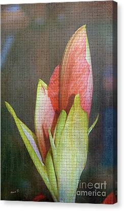 Impressionism Canvas Print - Amaryllis Buds On Tile by Nina Silver
