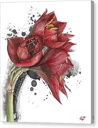 Amaryllis Flowers - 2. -  Elena Yakubovich Canvas Print
