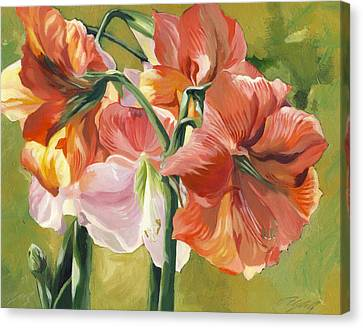 Amaryllis In Spring Canvas Print by Alfred Ng