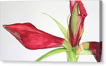Amaryllis Canvas Print by Kyong Burke