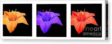 Amaryllis Tryptych Canvas Print by Kathie McCurdy