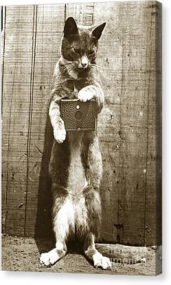Canvas Print featuring the photograph Amateur Feline Fotografer Cat With A Box Camera  Historical Photo 1900 by California Views Mr Pat Hathaway Archives