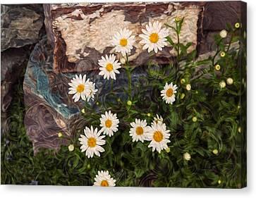 Amazing Daisies Canvas Print by Omaste Witkowski