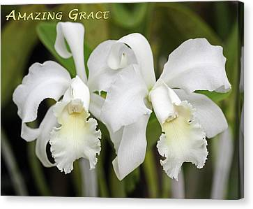 Amazing Grace Canvas Print by Dawn Currie