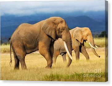 Amazing Grazing Elephant Bull In Amboseli National Park  Canvas Print