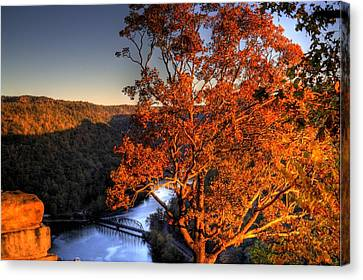 Amazing Tree At Overlook Canvas Print