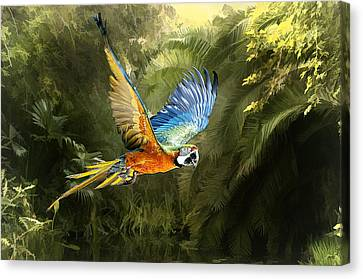 Canvas Print featuring the photograph Amazon Beauty by Brian Tarr