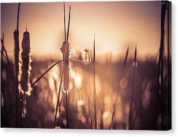 Canvas Print featuring the photograph Amber Glow by Jason Naudi Photography