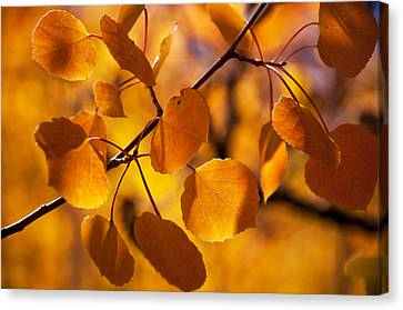 Amber Leaves Canvas Print by The Forests Edge Photography - Diane Sandoval