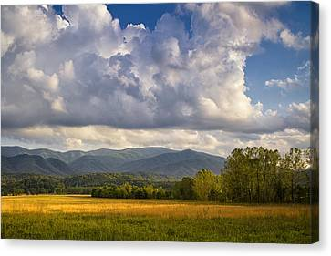 Amber Waves Canvas Print by Andrew Soundarajan