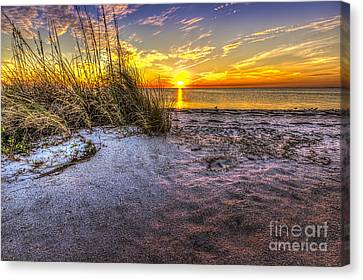 Seabird Canvas Print - Ambience Of The Gulf by Marvin Spates
