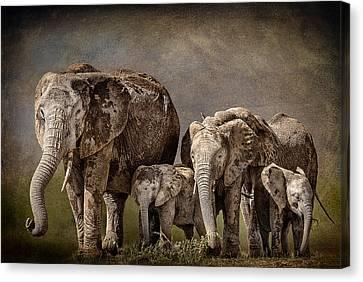 Amboseli Herd Canvas Print by Mike Gaudaur