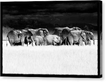 Amboseli Herd With Egret Canvas Print by Mike Gaudaur