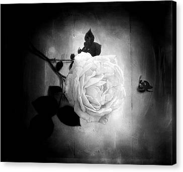 Ambridge English Rose Canvas Print by Louise Kumpf