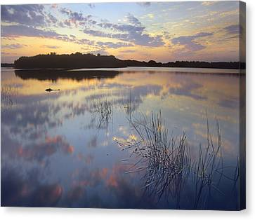 American Alligator Everglades Np Florida Canvas Print by Tim Fitzharris
