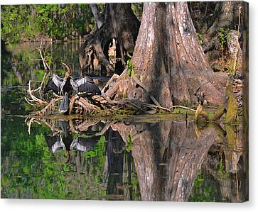 American Anhinga Or Snake-bird Canvas Print by Christine Till
