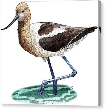Wade Drawings Canvas Print - American Avocet by Roger Hall