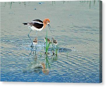 Canvas Print featuring the photograph American Avocet With Young by Lula Adams