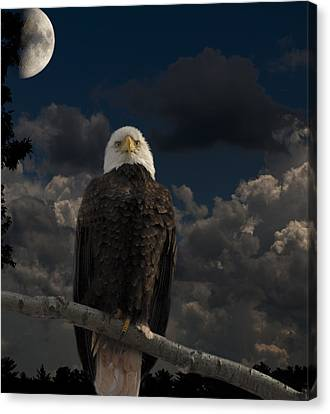 American Bald Eagle Composite Canvas Print by Thomas Young