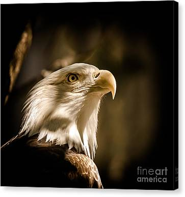American Bald Eagle Canvas Print by Robert Frederick