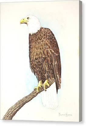 American Bald Eagle Watching Canvas Print by Dag Sla