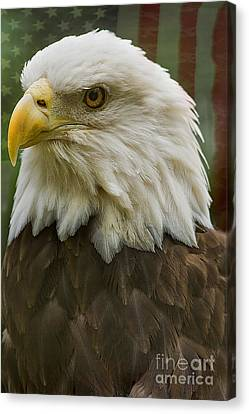 American Bald Eagle With American Flag Background Canvas Print by Anne Rodkin