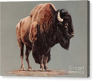 Canvas Print featuring the painting American Bison by DiDi Higginbotham