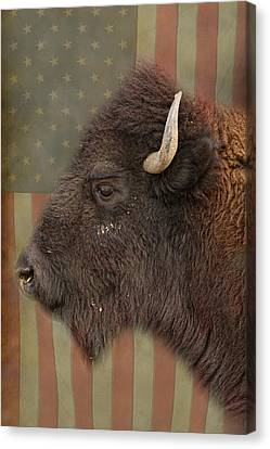 Bison Canvas Print - American Bison Headshot Profile by James BO  Insogna