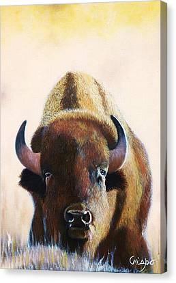 American Bison Canvas Print by Jean Yves Crispo
